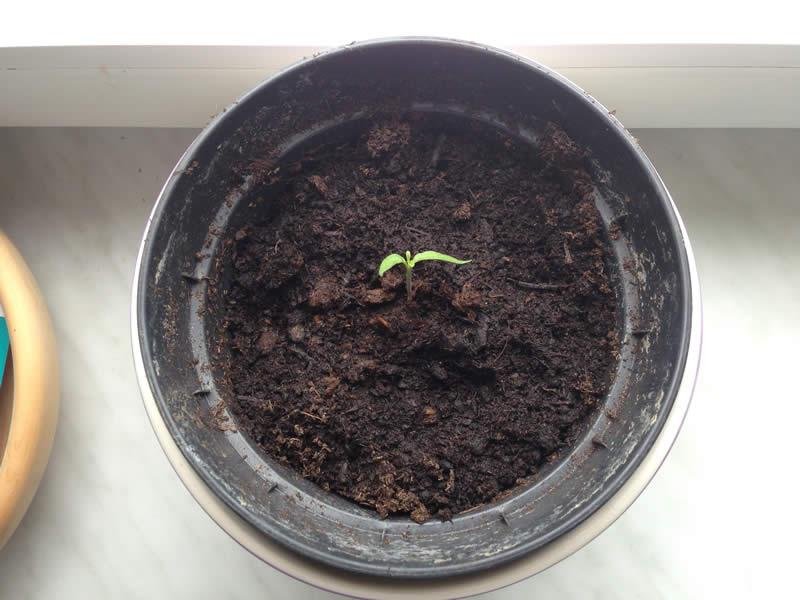 Plant in jar 2