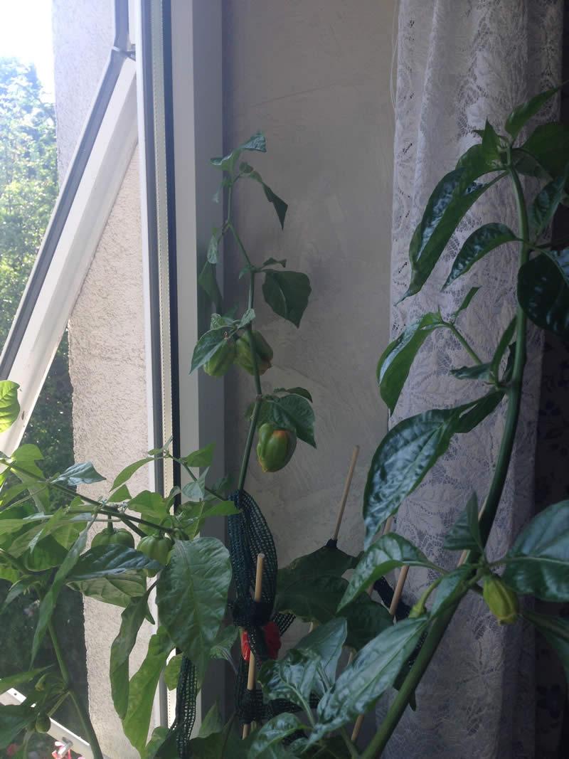 Fruit 2014-08-02 3